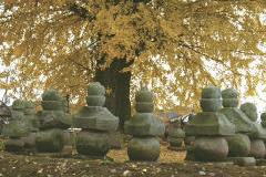 『結城家御廟』の画像