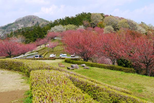 『富谷山ふれあい公園1』の画像
