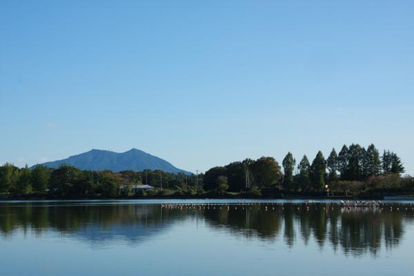 『上野沼1』の画像