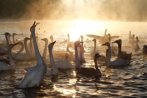 『桝箕が池2』の画像