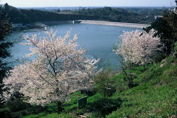 『つくし湖のサクラ3』の画像