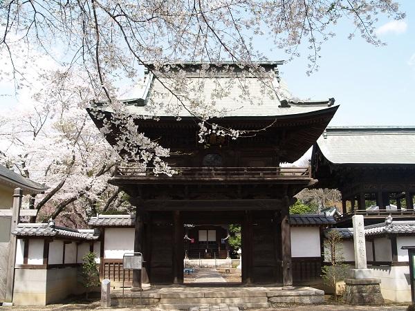 『『結城桜まつり(弘経寺)』の画像』の画像