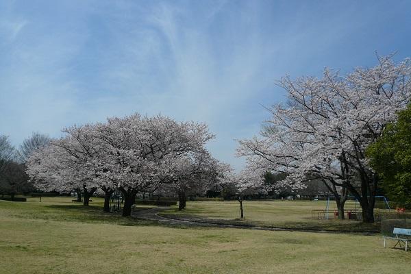 『鹿窪運動公園(さくら)』の画像
