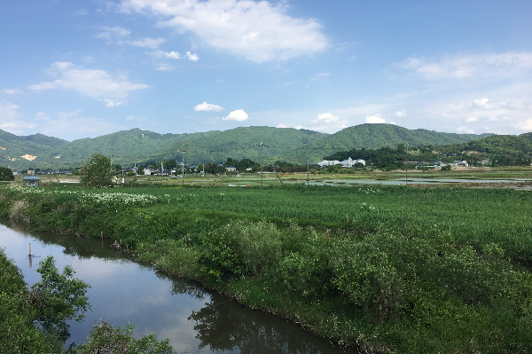『桜川(1)』の画像