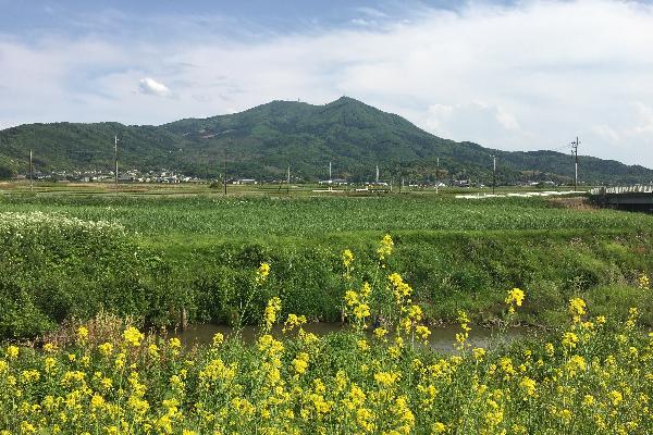 『桜川(2)』の画像