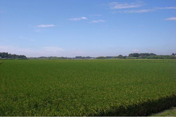 『田園(1)』の画像