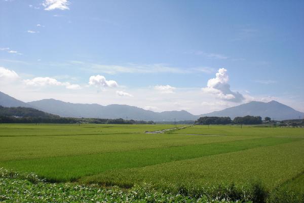 『田園(3)』の画像
