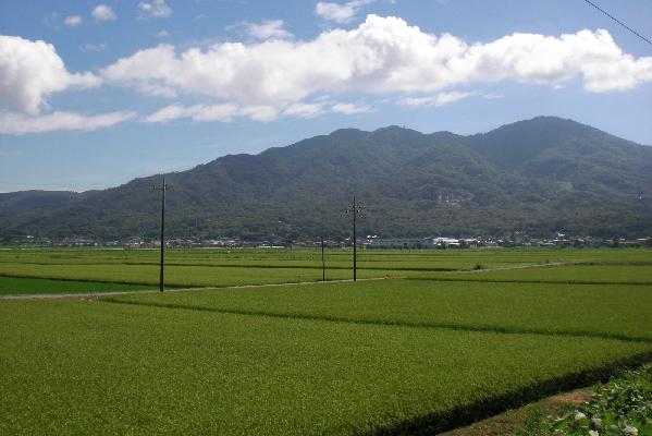 『田園(7)』の画像