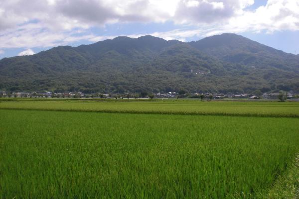 『田園(8)』の画像